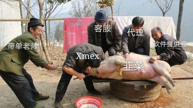 """""""Xmex交易所""""杀猪大量收割韭菜,近期严厉整治!"""